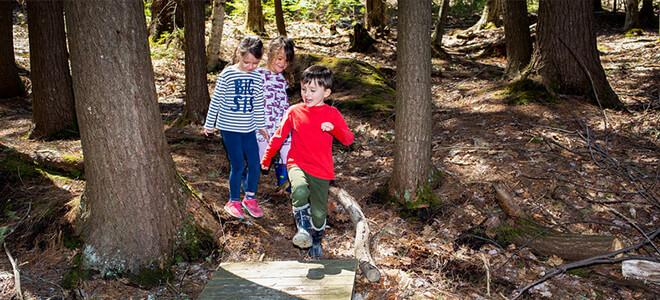 Kindergarten kids walking through the woods at Toddle Inn